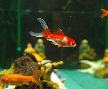 akvaryum balıklarının bakımı nasıl yapılır